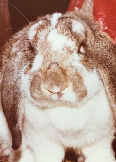 Benson Bunny Jones Show-min